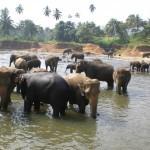 Sri Lanka Wildlife Ministry builds a new interim elephant orphanage