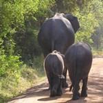 School closed following elephant invasion!