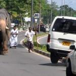 Jumbo runs amok in the suburbs of Colombo