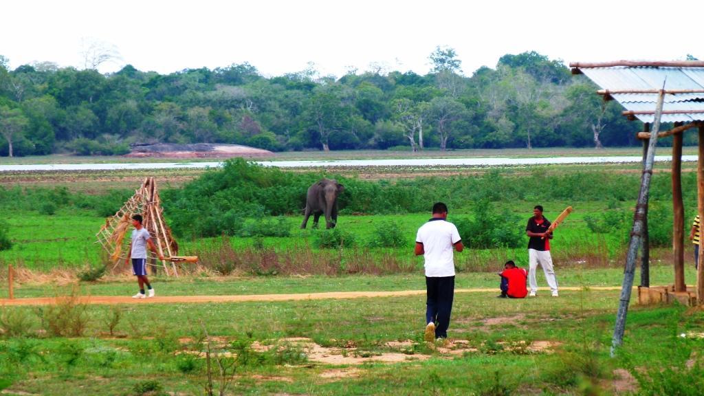 A wild Elephant At Cricket!