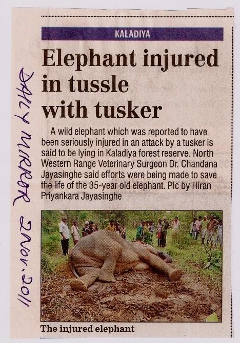 Now elephants fighting among themselves?
