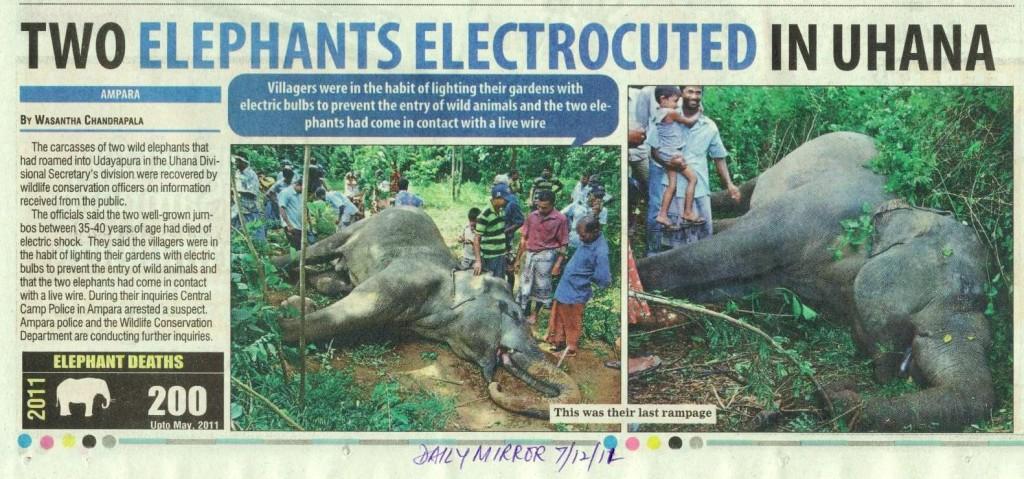 More Elephant Deaths