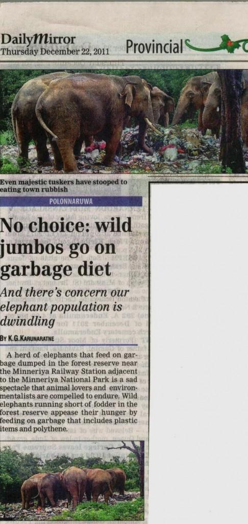 Elephants at rubbish dump